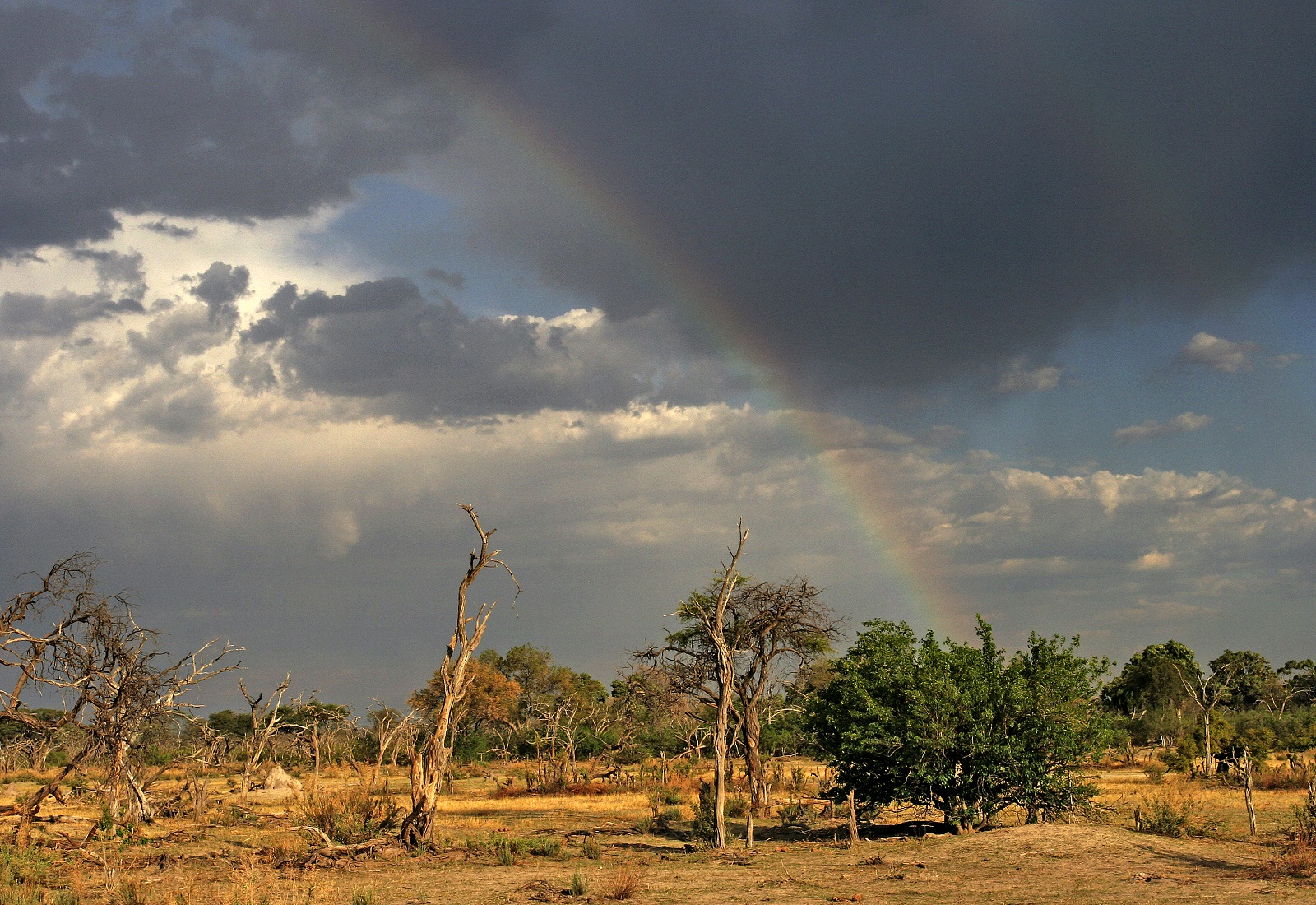Simbabwe Botswana Reise Die Viktoriaf 228 Lle Und Safari
