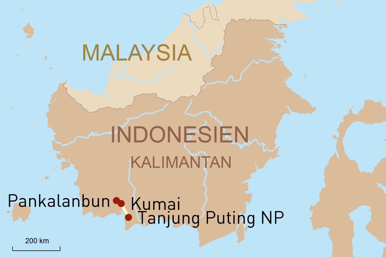 Auf Privatbesuch bei den Waldmenschen Indonesiens